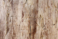 tree-bark-textures-vol-1-preview